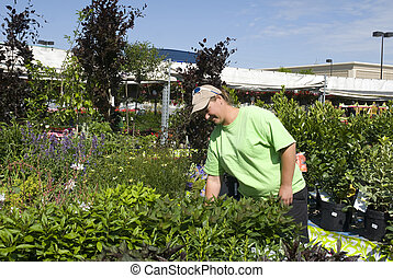 A horticulturist tends Plants - A horiculture worker tends...