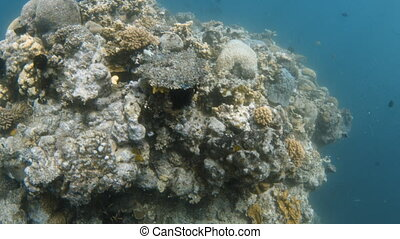 A huge chunk of coral reef underwater - A birds eye view of...