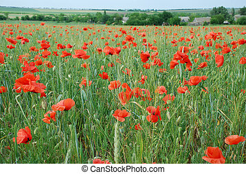 A huge field of flowers and red pop