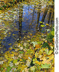 A huge puddle, carpet-covered fallen yellow leaves, the blue sky and brown tree trunks reflect on the surface of the water.