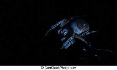 huge spider devours its prey - a huge spider devours its...