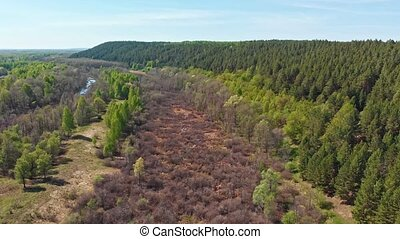 A huge thicket of coniferous green forest and empty field. Aerial shot