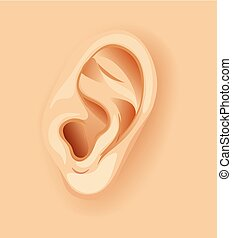 A Human Ear Close Up