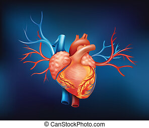 Illustration of a human heart on a blue background