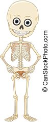 A Human Skeleton on White Background