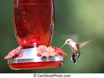 A hummingbird eating at a feeder.