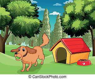 a, hund, spielen draußen, a, hundehütte