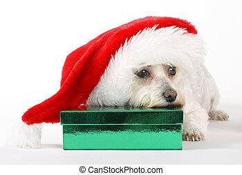 a, hund, weihnachten