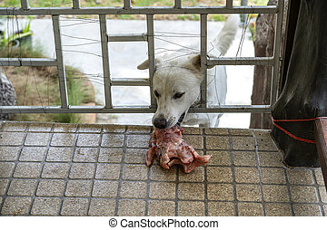 A hungry dog holds a piece of meat through a trellised gate ...