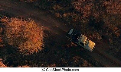 A hunting off-road car rides in the savannah.
