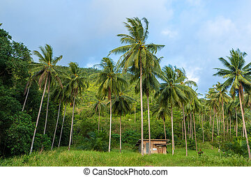 A hut between palm trees in the jungle