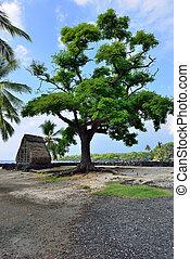a hut on the beach at Pu'uhonua o Honaunau the Place of Refuge on the Big Island of Hawaii