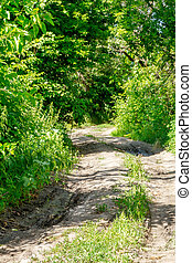 image of a dirt road through the deciduous forest