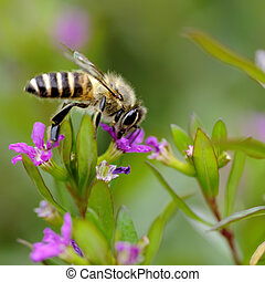 a interesting bee on flower
