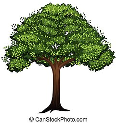 A isolated tree on white background