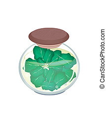 Vegetable, An Illustration of Pickled Collard or Green Cabbage in Brine of Vinegar and Salt in A Glass Jar Isolated on White Background.