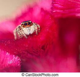 a jumper spider resting on the petal of a red flower