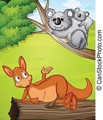 A kangaroo and koalas