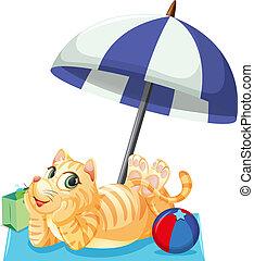 a, katt, på, summerferie