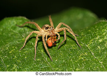 a kind of animal named spider