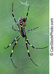 spider - a kind of insects named spider