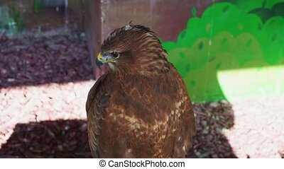 a kite sits in an aviary at the. birds of prey in captivity. observation of the animals.