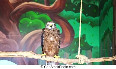 a kite sits in an aviary at the zoo. birds of prey in captivity. observation of the animals.
