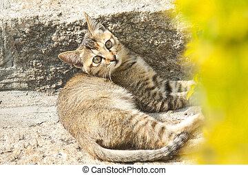 A kitten cat on the ground