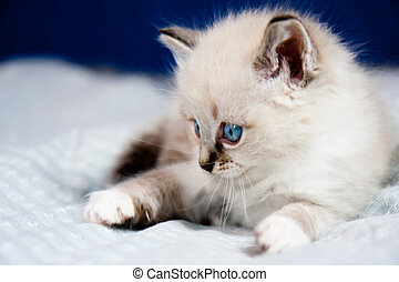 A kitten ready to hunt