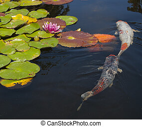 fish pond - A koi fish pond with lily pads and flowers ...