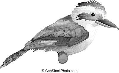 A kookaburra - Illustration of a kookaburra on a white...