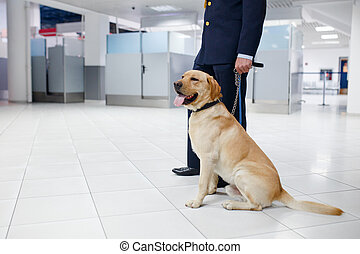 A Labrador dog for detecting drugs at the airport standing near the customs guard. Horizontal view.