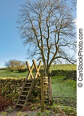 A ladder stile leading in to a field with a tree in Cumbria,...