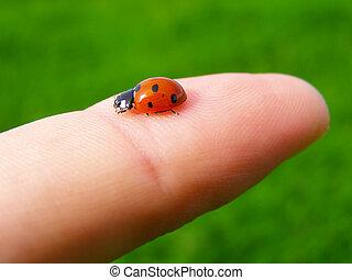 A ladybug on a finger