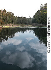 a lake with clouds reflection in the forest