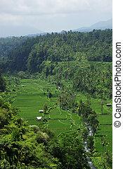 A landscape of Bali island