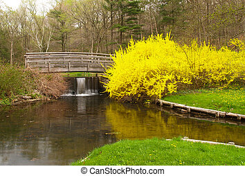 a landscaping scenery at botanic garden in US