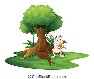 Blanc carotte fond illustration - Arbre a carotte ...