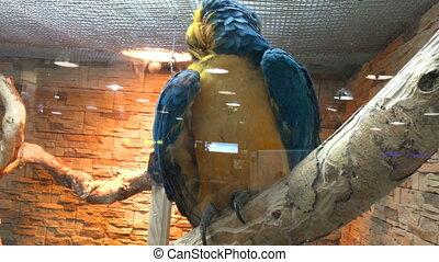 a large beautiful Parrot ARA