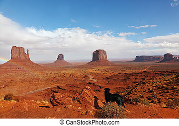 A large black dog in the red desert