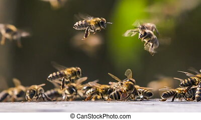 A large cluster of bees gathered in a group and scattered....