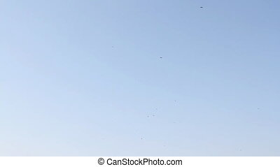 A large flock of birds flying in the sky