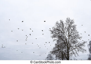 A large flock of crows on the branches of tall trees against a cloudy sky.