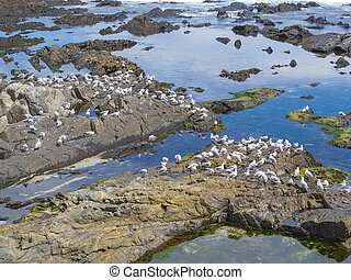 a large flock of seagulls sitting on stones
