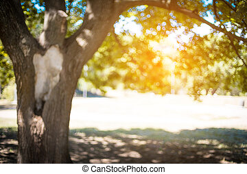 A large green tree in the park in the rays of sunlight. Summer concept