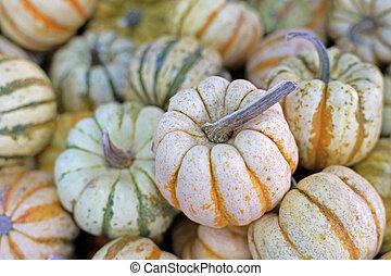carnival squash pumpkin - A large group of carnival squash...