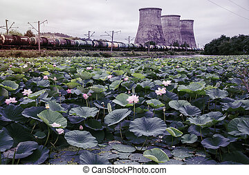 a large lake full of lotuses, followed by the distribution station is located. in the afternoon