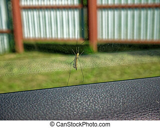 a large mosquito on the windshield of a car in summer