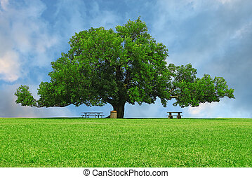 A large oak tree in a grass field in a park used as a shade ...