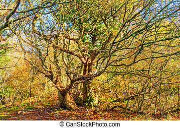 A large old tree in a park in autumn